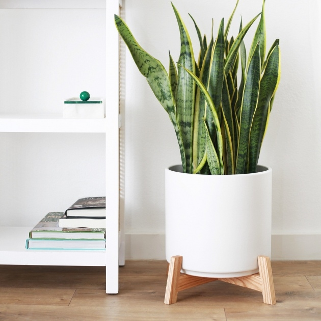 Remarkable Large Indoor Plant Pots Image