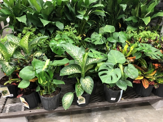 Remarkable Lowes Plants Photo