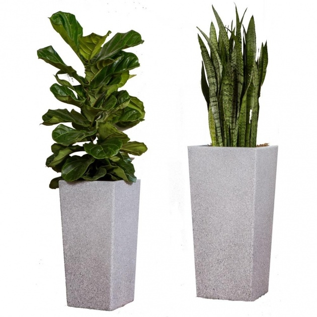 Remarkable Plant Pot Sizes Photo