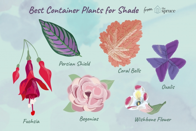 Remarkable Plants For Planters In Shade Photo