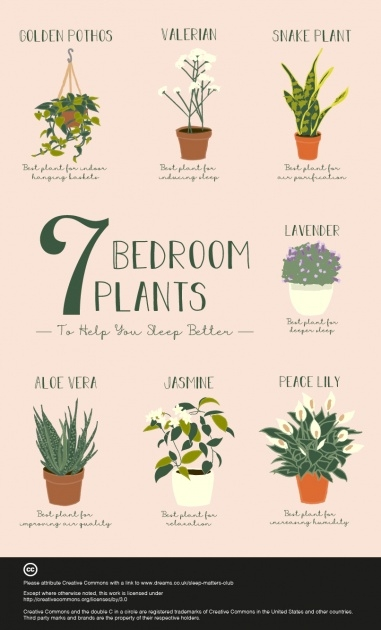 Remarkable Plants In Bedroom Feng Shui Photo
