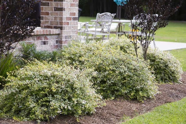 Remarkable Small Outdoor Shrubs That Dont Need Light Photo