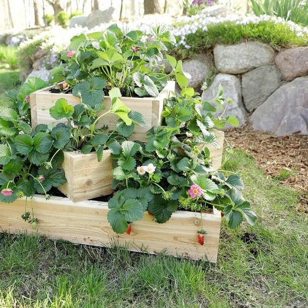Remarkable Strawberry Planter Plans Photo