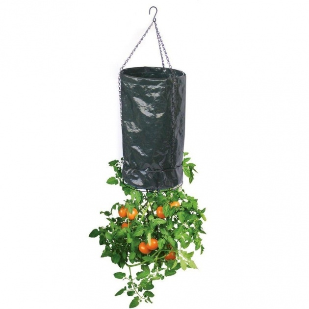 Remarkable Topsy Turvy Tomato Planter Photo