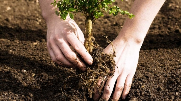 Remarkable Tree Planting Photo