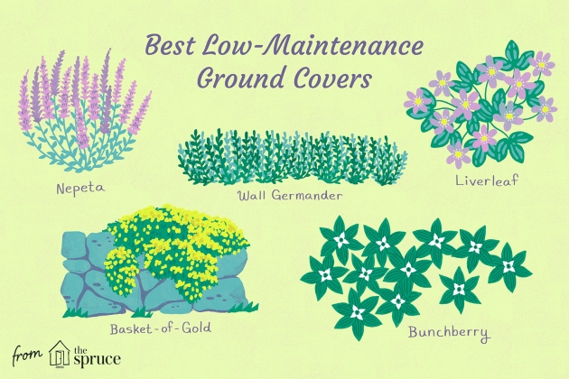 Sensational Low Ground Cover Plants Image