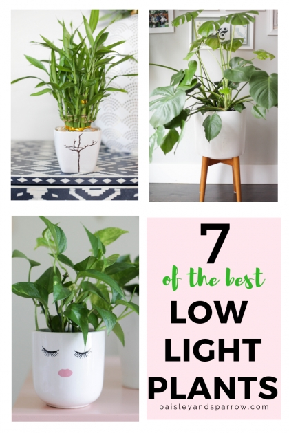 Sensational Low Light Indoor Plants Picture