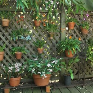 Small Lattice For Potted Plants