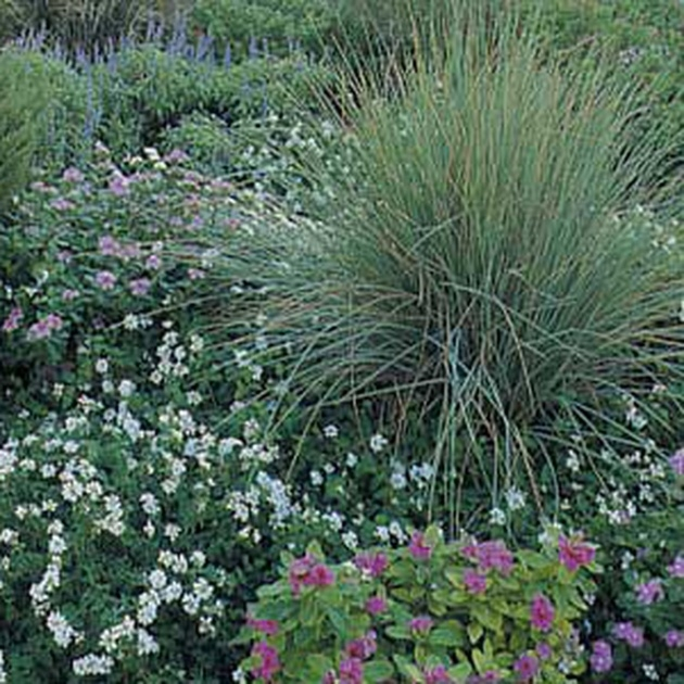 Sensational Small Outdoor Shrubs That Dont Need Light Photo
