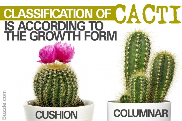 Sensational Types Of Cactus Picture