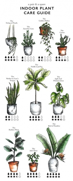 Simple 25 Indoor Plants And Caring Tips Picture
