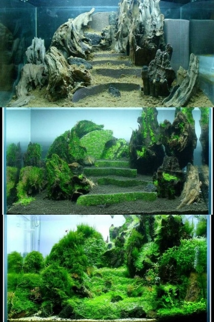Simple Aquarium Plants Ideas Picture