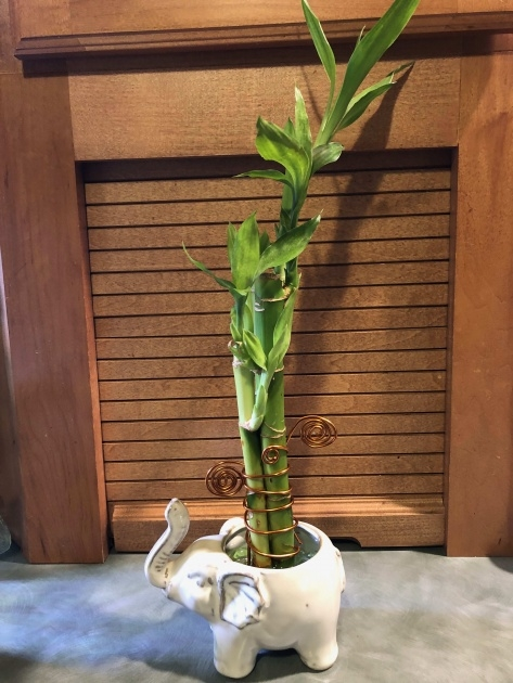 Simple Bamboo Plant Picture