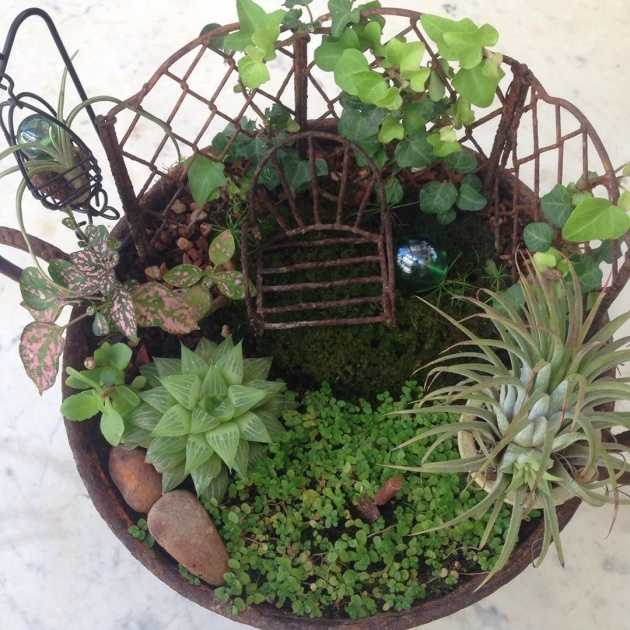 Simple Fairy Garden Plants Picture