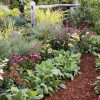 Flower Bed Plants