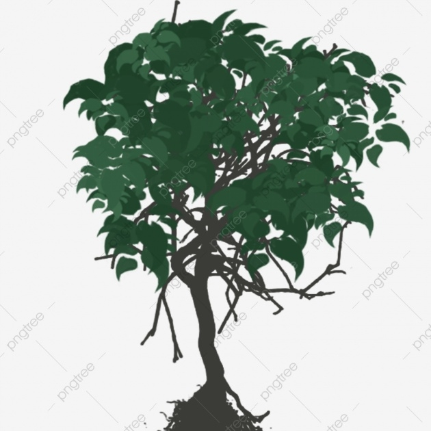 Simple Small Tree Plant Picture