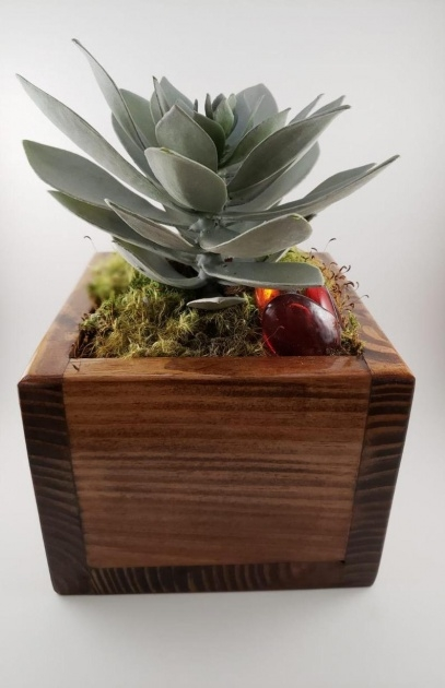 Simple Succulent Planter Box Photo