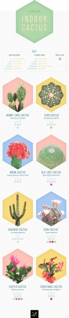 Simple Types Of Cactus Picture