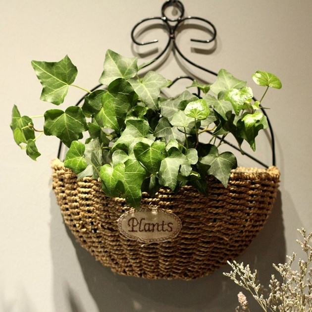 Simple Wall Baskets For Plants Image