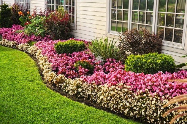 Splendid Flower Bed Plants Image