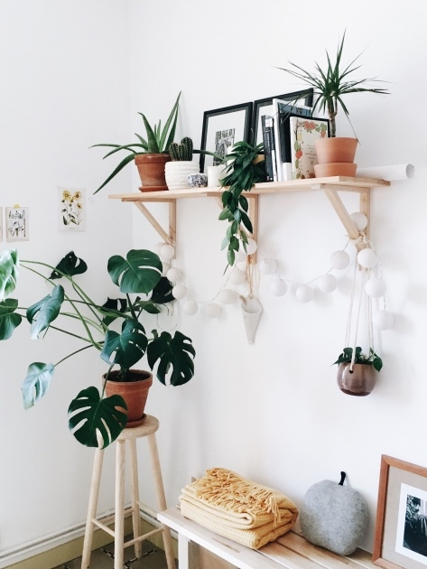 Splendid Hanging Plant Decor Image