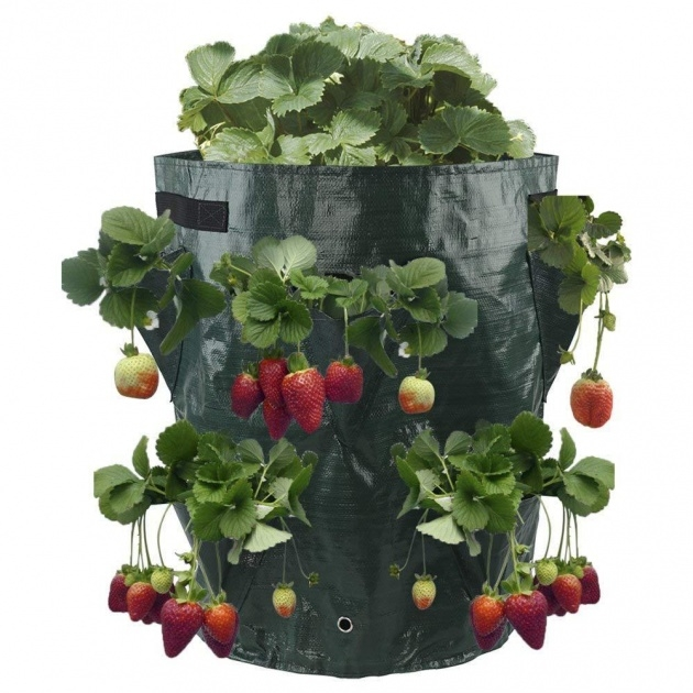 Splendid Hanging Strawberry Planter Photo