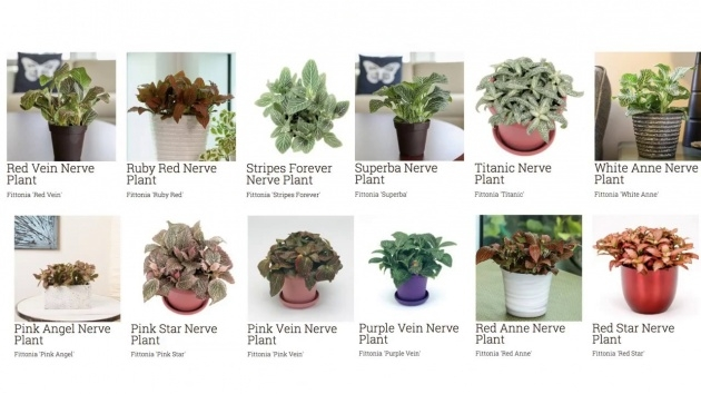 Splendid House Plants Identification Picture
