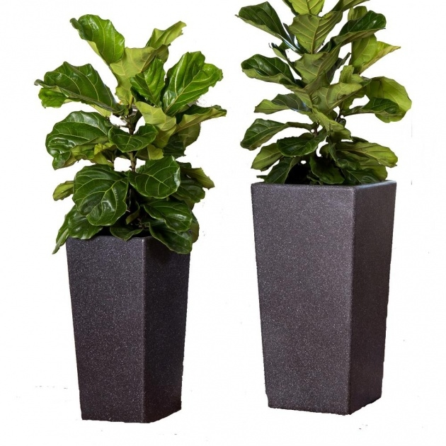 Splendid Tall Black Planter Picture