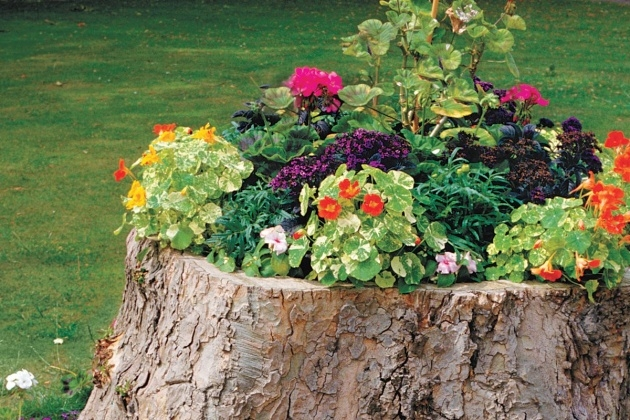 Splendid Tree Stump Planter Photo