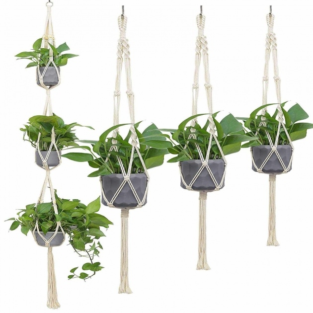 Splendid Wall Plant Hangers Outdoor Picture