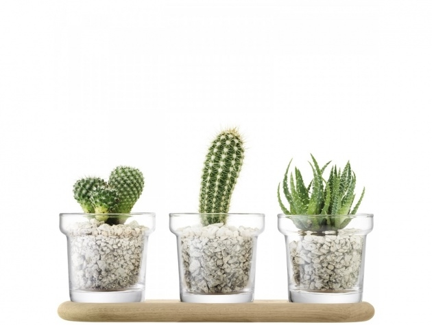 Stunning Clear Plant Pot Image