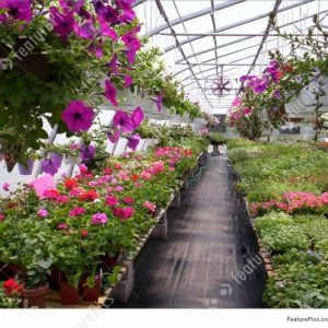 Green House Plants Pictures