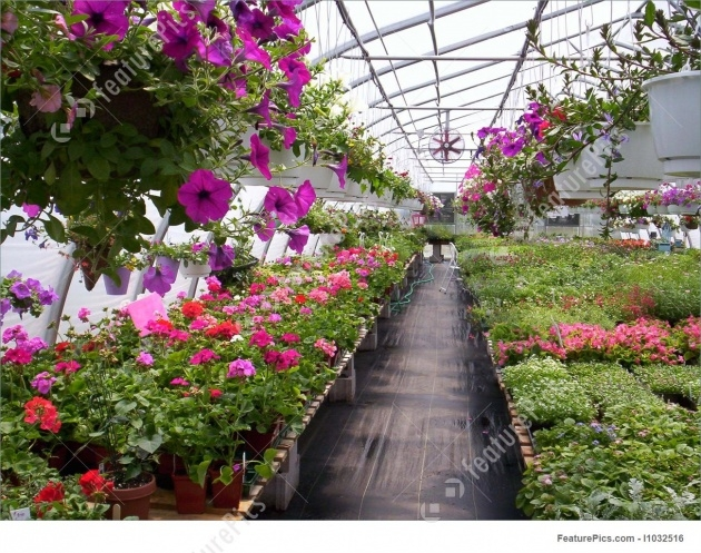 Stunning Green House Plants Pictures Picture