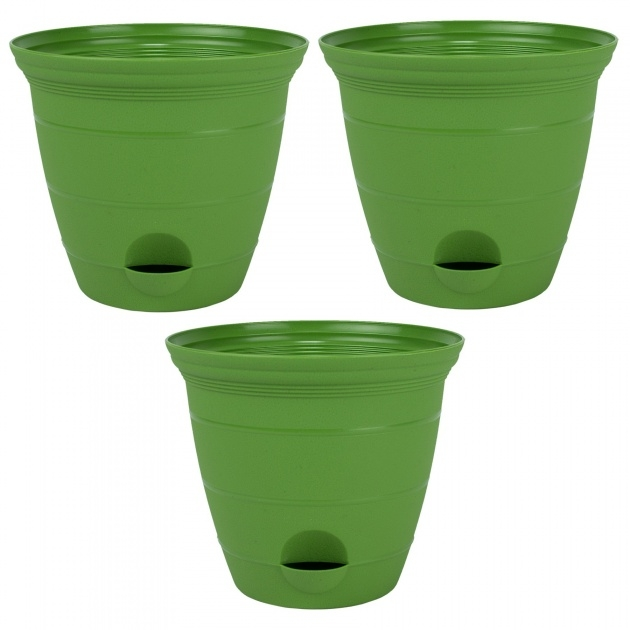 Stunning Green Plant Pot Photo