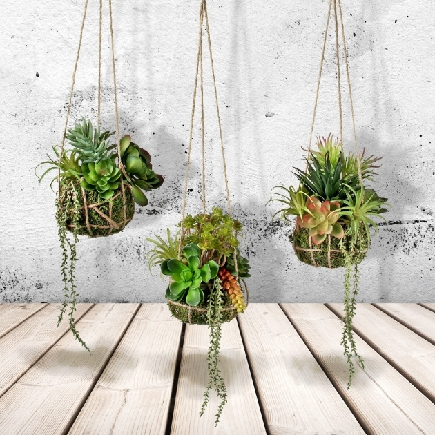Stunning Hanging Succulent Plants Photo