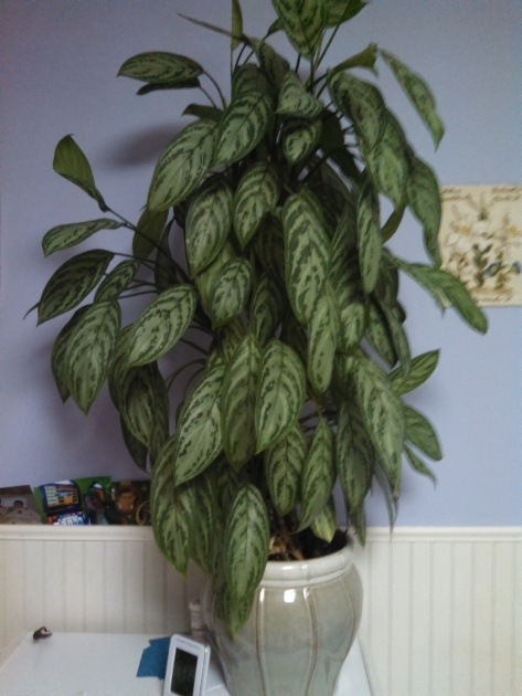 Stunning House Plants Identification Picture