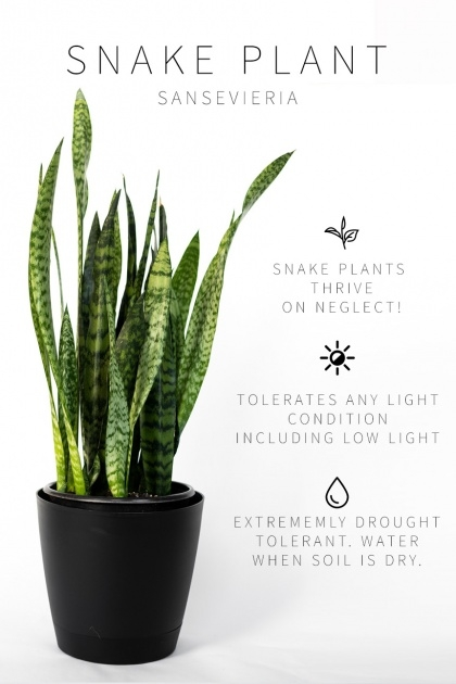 Stunning Low Light Indoor Plants Image
