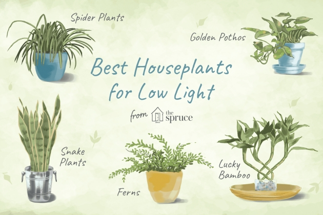 Stunning Low Light Indoor Plants Photo