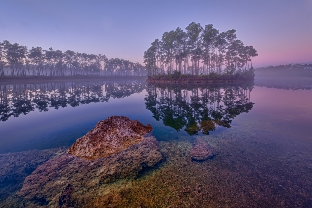 Stunning Plants In The Everglades Facts Picture