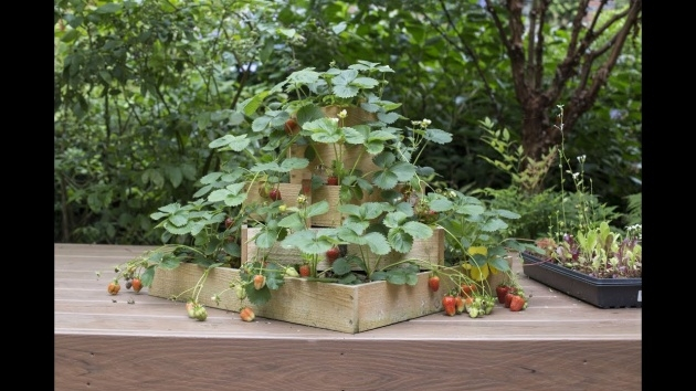 Stunning Strawberry Planter Plans Picture
