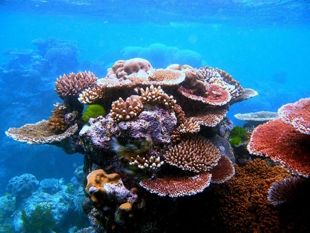 Stunning The Great Barrier Reefs Plants Photo