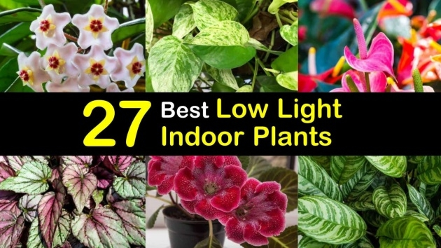 Stylish Best Indoor Plants For Low Light Image