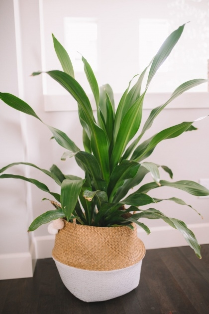 Stylish Common House Plants Picture