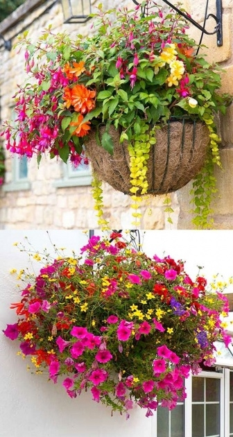 Stylish Hanging Flower Plants Picture