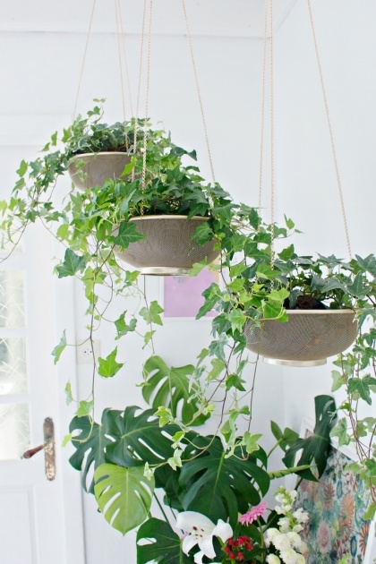 Stylish Hanging Plants Ideas Image