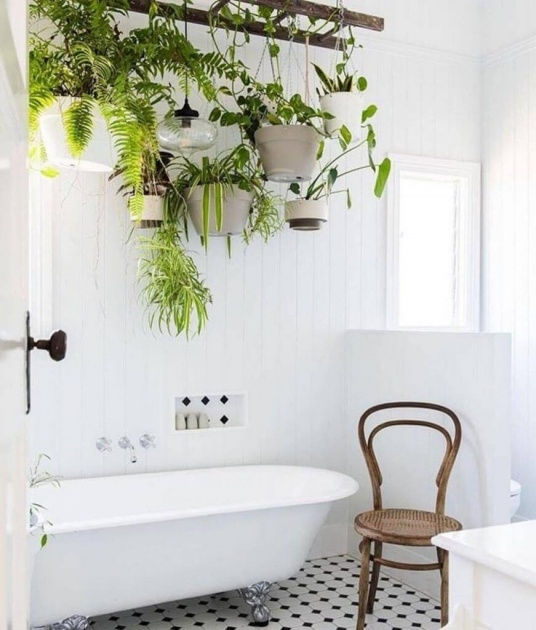 Stylish Hanging Plants Ideas Picture