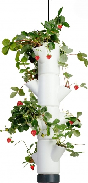 Stylish Hanging Strawberry Planter Image
