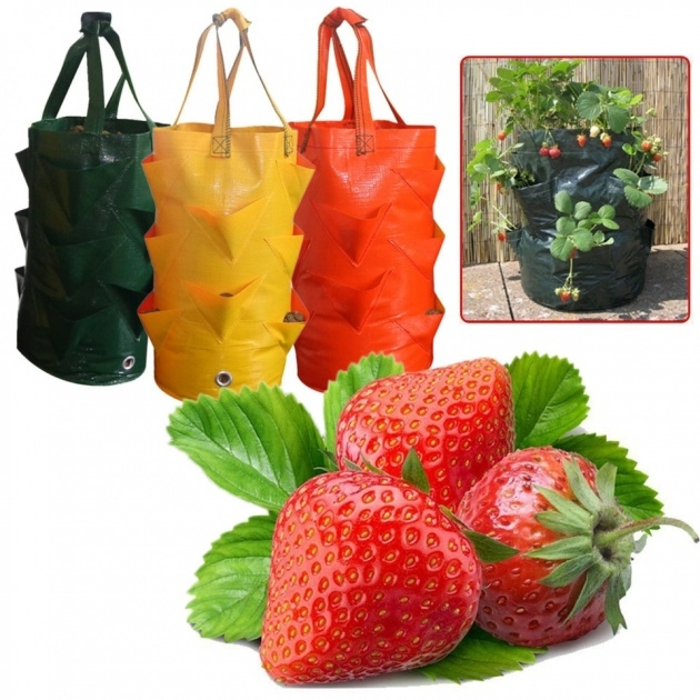 Stylish Hanging Strawberry Planter Photo