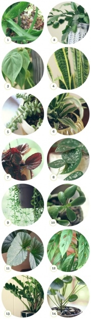 Stylish House Plants Identification Photo