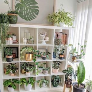 Indoor Pot To Beutify House